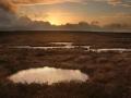 liffeyhead-bog